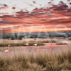 Flamingos by Dr Martin Raskovsky