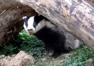 Badger TWASI Visit October 2018