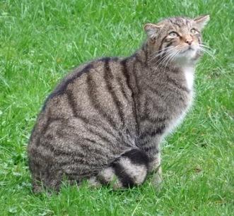 Scottish Wildcat TWASI Visit October 2018