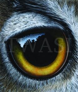 Ayse Rifat - Eye www.ayserifat.co.uk art@ayserifat.co.uk