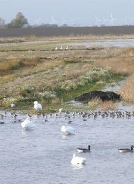 Welney marshes - TWASI Visit