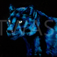 Panther by Wendy Britton