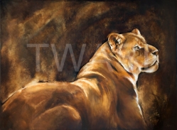 'Lioness' by Ang O www.ango-paintings.com