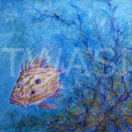 Dory by Michael Connor