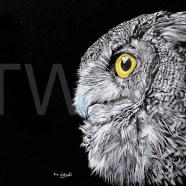 Owl-by-Eric-Watson