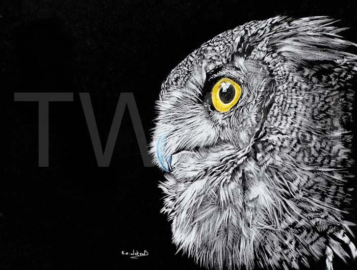Eric Watson - Owl wterc@aol.com www.naturethroughart.com www.ericwatsonart.com