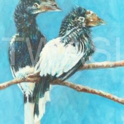 'Hornbills' by Sandy Bell tintinna@aol.com https://www.tintinna.com