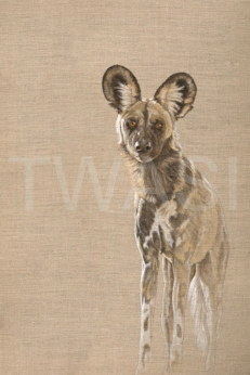 Christine Dadd Highly Commended Khawi Wild Dog