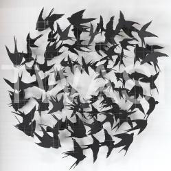 Sarah Trenchard - Birds info@sarahtrenchardart.co.uk www.sarahtrenchardart.co.uk
