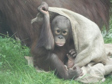 Chester Zoo 10