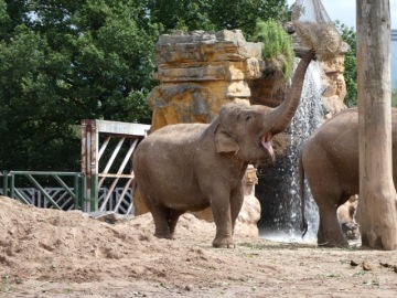 Chester Zoo 5