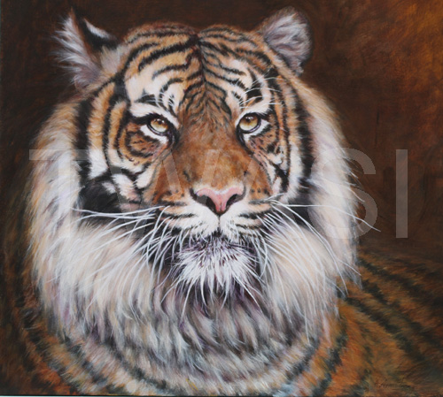 A Leicester Tiger by Hazel Armstrong