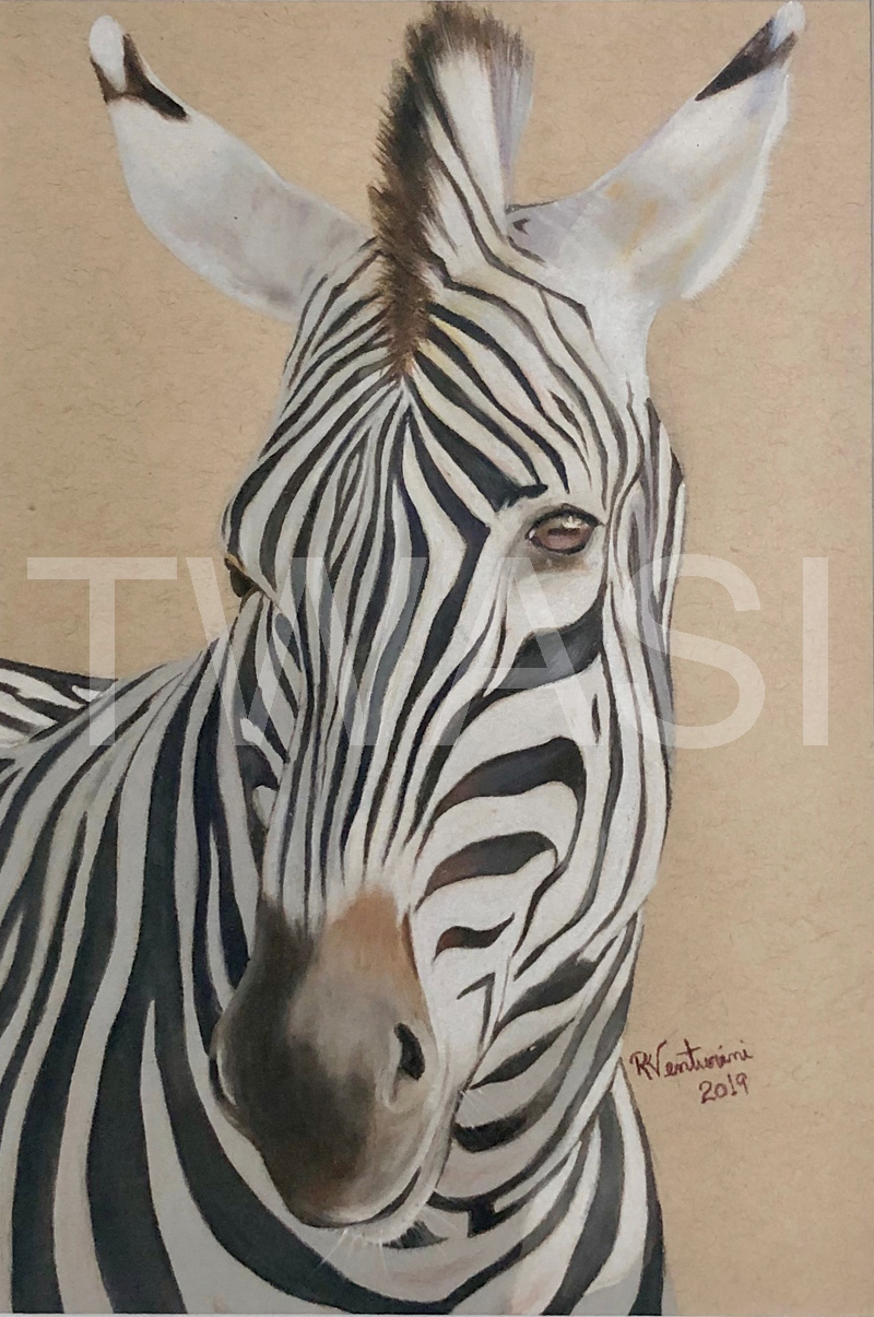 Zebra by Rosana Venturini