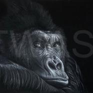 'Gorilla' by Geraldine Boley https://www.geraldineboley.co.uk geraldine.boley@googlemail.com