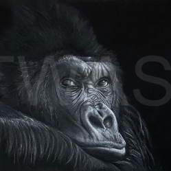 'Gorilla' by Geraldine Boley https://www.geraldineboley.co.uk geraldine.boley@googlemail.com