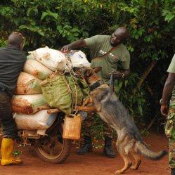 Perla at a roadblock DRC