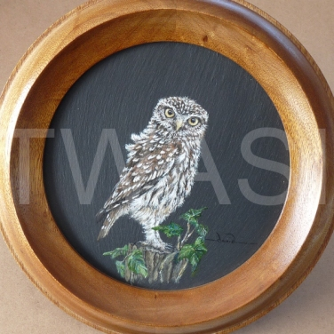 'I SPY...' by David Spencer Acrylic on Welsh Slate Framed 30cms diameter £115