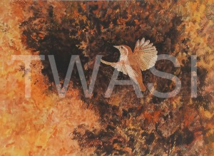 'Wren' by Jacqui Franks Framed 54.5 x 44.5 Water Colour £325