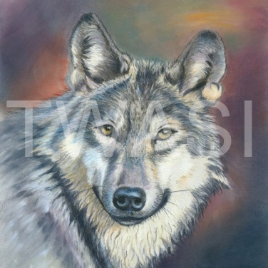 'Wolf' by Ann Hunt Coloured pencil & pastels Unframed 32 x 25 £230