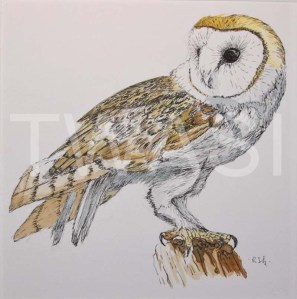 'Barn Owl' by Rosemary Gowland Ink and Acrylic Unframed 18 x18 £125