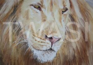 'Fair Pharaoh' by Carol Barrett Watercolour Unframed Size 50 x 40cm £320