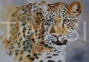 'Solo' by Carol Barrett Watercolour Unframed Size 40 x 35cm £300