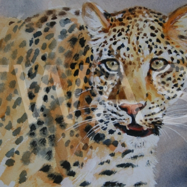 'Solo' by Carol Barrett Watercolour Unframed Size 40 x 35cm £300