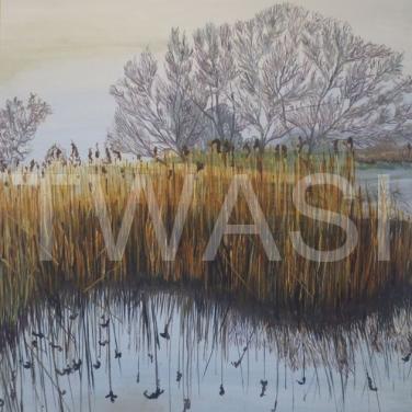 'Golden Reeds' Llangorse Lake by Carole H Gaylard Acrylic Framed 57 x 67 cm £320