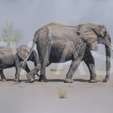 'Elephant Child' by Caroline Bletsis Watercolour 42 X 26 Cm Unframed £300
