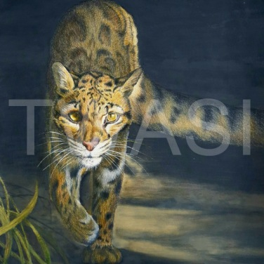 'Out of the Shadows' by Caroline Strong Unframed 40 x 30 Coloured Pencil £295