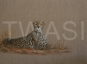 'Cheetah' by Christine Dadd Oil on untreated Linen Framed 66 x 50 £550