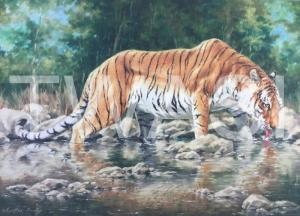 'Cool Water' by Cynthia Chandler Oil Framed 60 x 82 £500