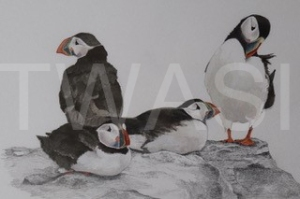'Puffins' by David Knight Watercolour Mounted 39.5x33.5 £175
