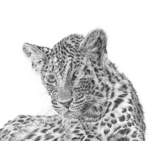 'Leopard cub 2' by David Skidmore Graphite pencil on Fabriano Artistico 300gsm hot press paper Unframed 26 x 26cm £395