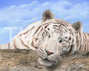 'Narnia' by Deb Stanley Coloured Pencils & Pastels Unframed 40x50cm £600
