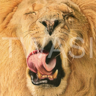 'Yawn' by Deb Stanley Coloured Pencils Unframed 40x50cm £600