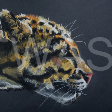 'Stalking the Prey' by Diane Haines Pastel on Paper Framed 74 x 47 £325