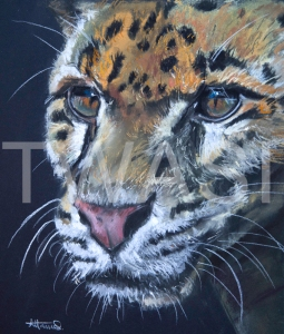 'Leopard Head' by Diane Haines Pastel on Paper Framed 50 x 50 £325