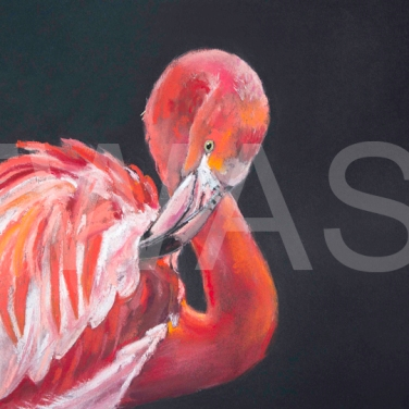 'Preening Flamingo' by Diane Haines Pastel on Paper Framed 70cm x 58 Pastel on Paper £325