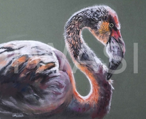 'Pretty Flamingo' by Diane Haines Pastel on Paper Framed 74 x 62 £325