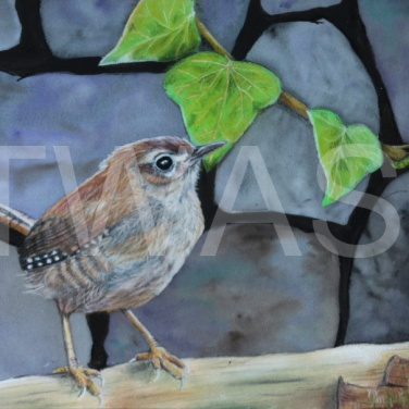 'Jenny Wren' by Frances Daunt Mixed media Unframed 18 x 24 £100