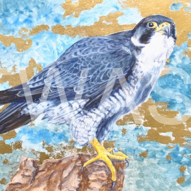 'Peregrine Pride' by Helen Rawlings Egg Tempura and Gold Leaf on gesso'd board Framed 30 x 24.5 £275