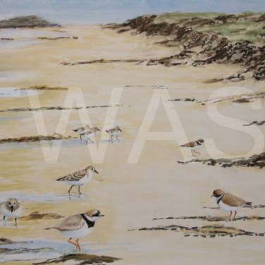 'High Tide' by Rosemary Gowland Pastel Unframed 38 x 27 £175