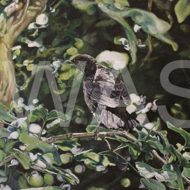 'Blackbird' by Immy Hathaway Acrylic Framed 45 x 63 Unframed 42x 60 £345