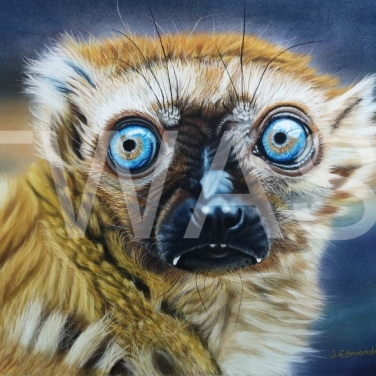 'Eyes a Lemur' by Jacqueline Edmonds Pastel Unframed (Mounted) 30 X 40 £250