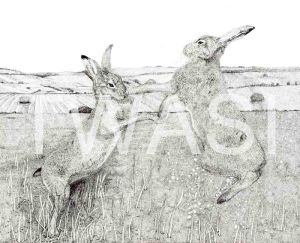 'March Hares' by Jacqui Franks Framed 70 x 60 Pen & Ink £325