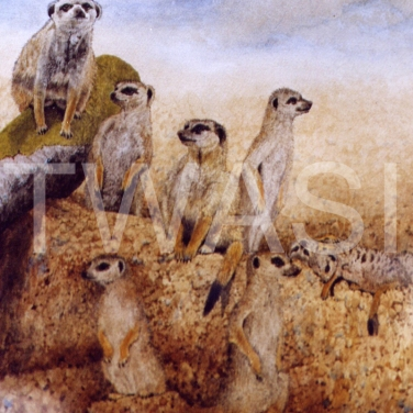 'Posers' by Jacqui Franks Framed 47 x 57 Water Colour £235