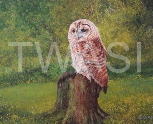 'Tawny Owl Fledgling' by Jacqui Franks Framed 68 x 58 Oil & Acrylics Original £325