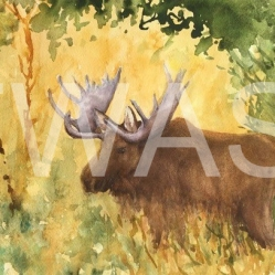 'Bull Moose Yellowstone Park' by Jan Watts Unframed watercolour 37 x 26 £240