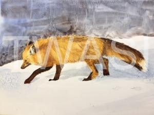 'The Red Fox' by Jan Watts Unframed watercolour 55 x 40 £375